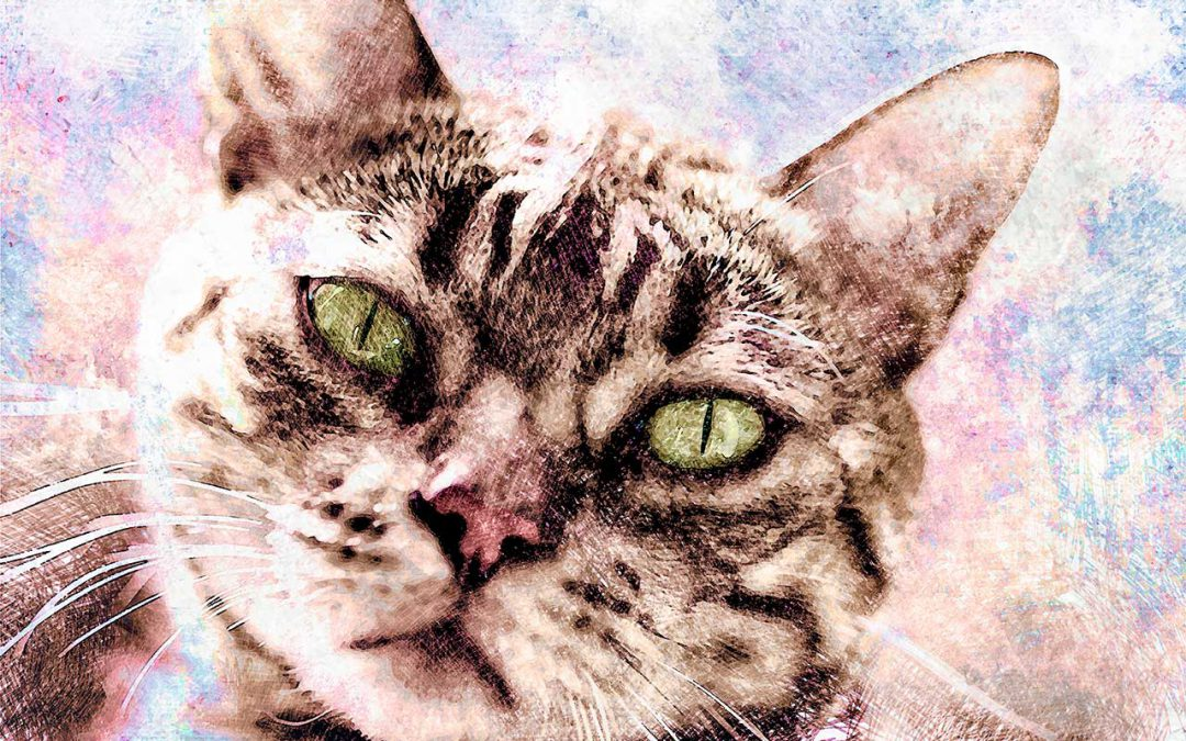 Portret van mijn kat