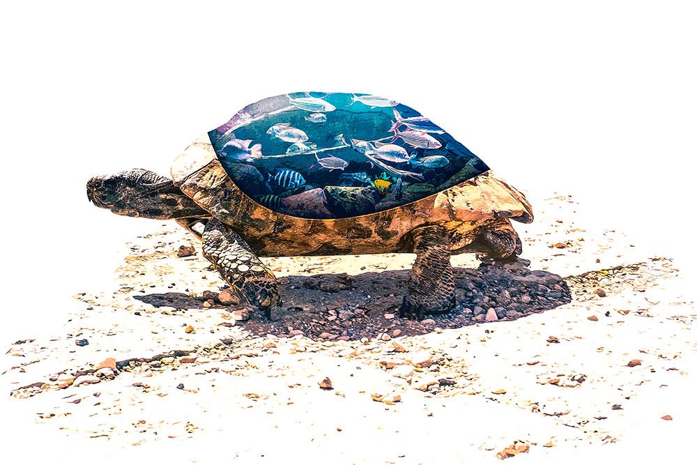 Fotomanipulatie aquarium in schild van schildpad