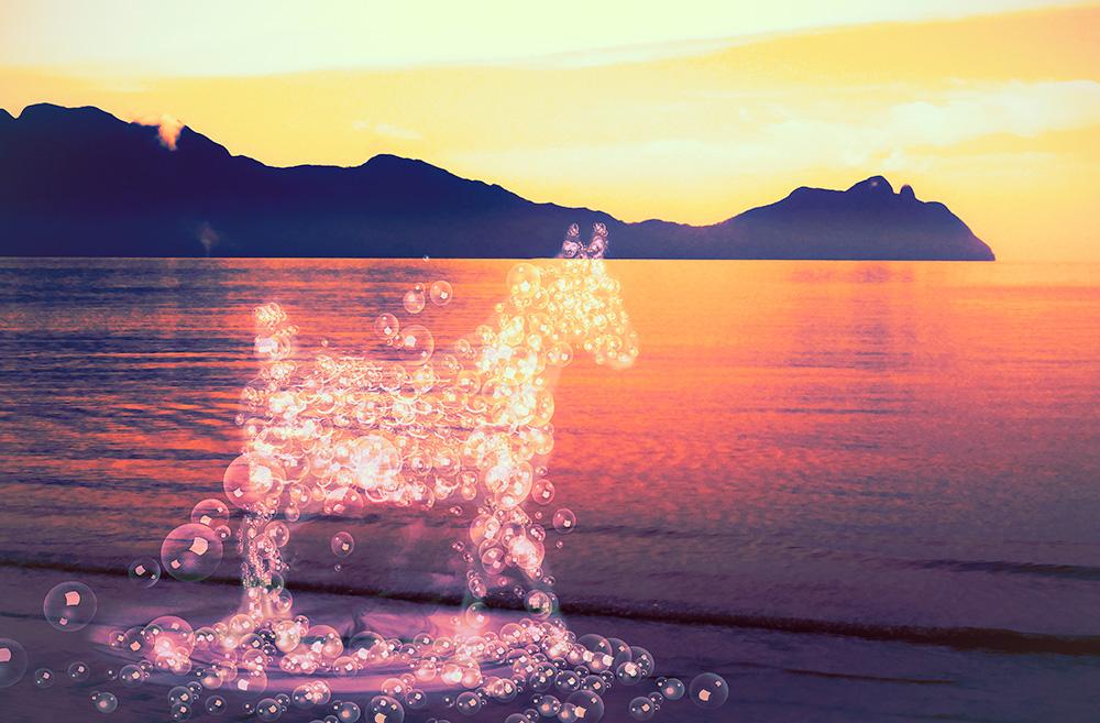 Paard van waterbubbels