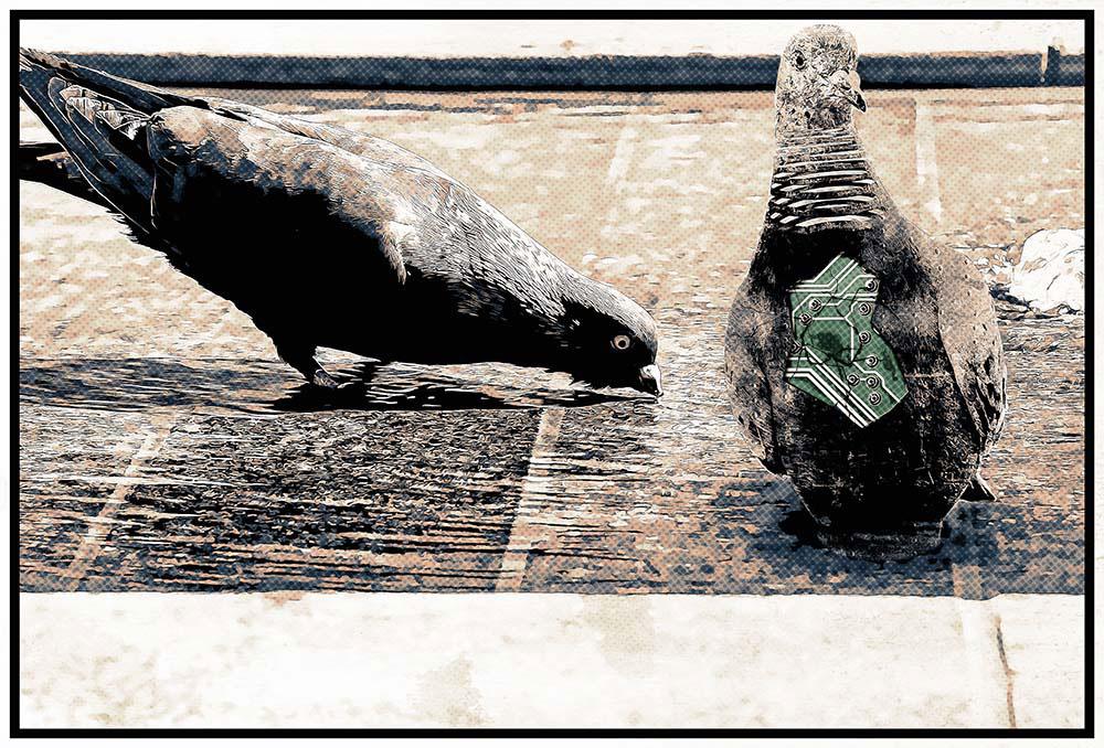 Cyber pigeon