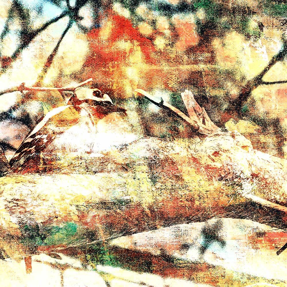 Grote bonte specht op een tak van een grove den